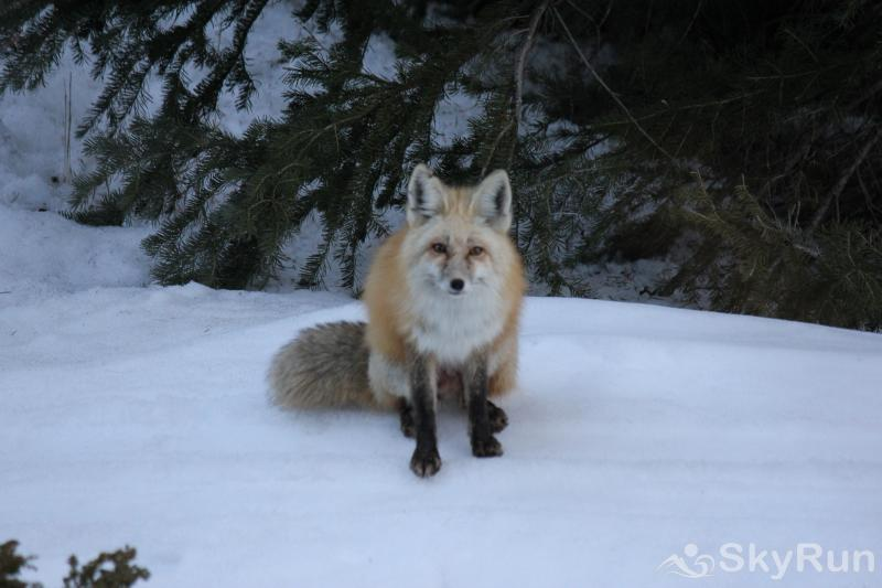 9040 Ryan Gulch 3 BDRM Fox friend