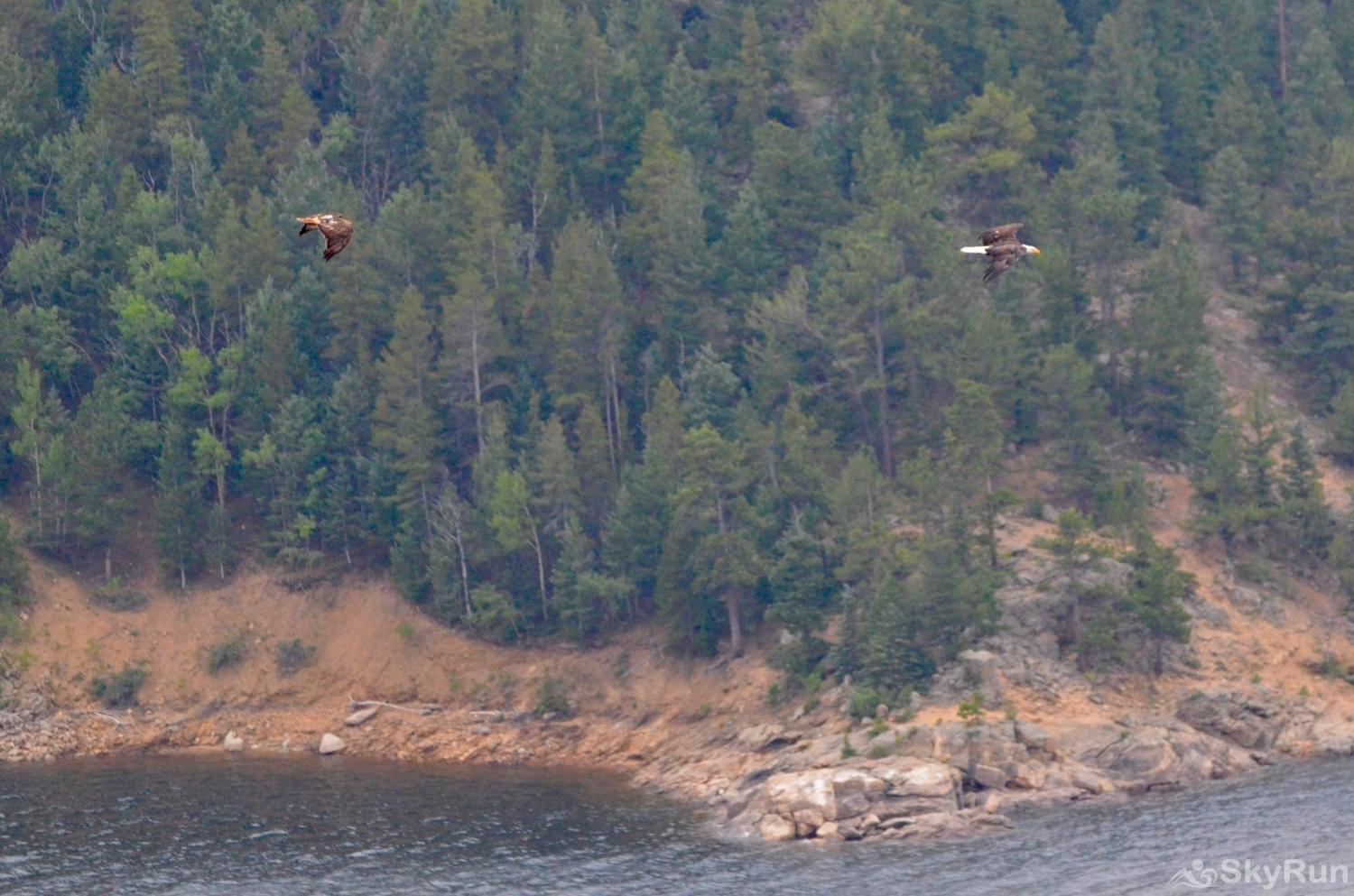 Timberline Haus Eagles flying over Lake