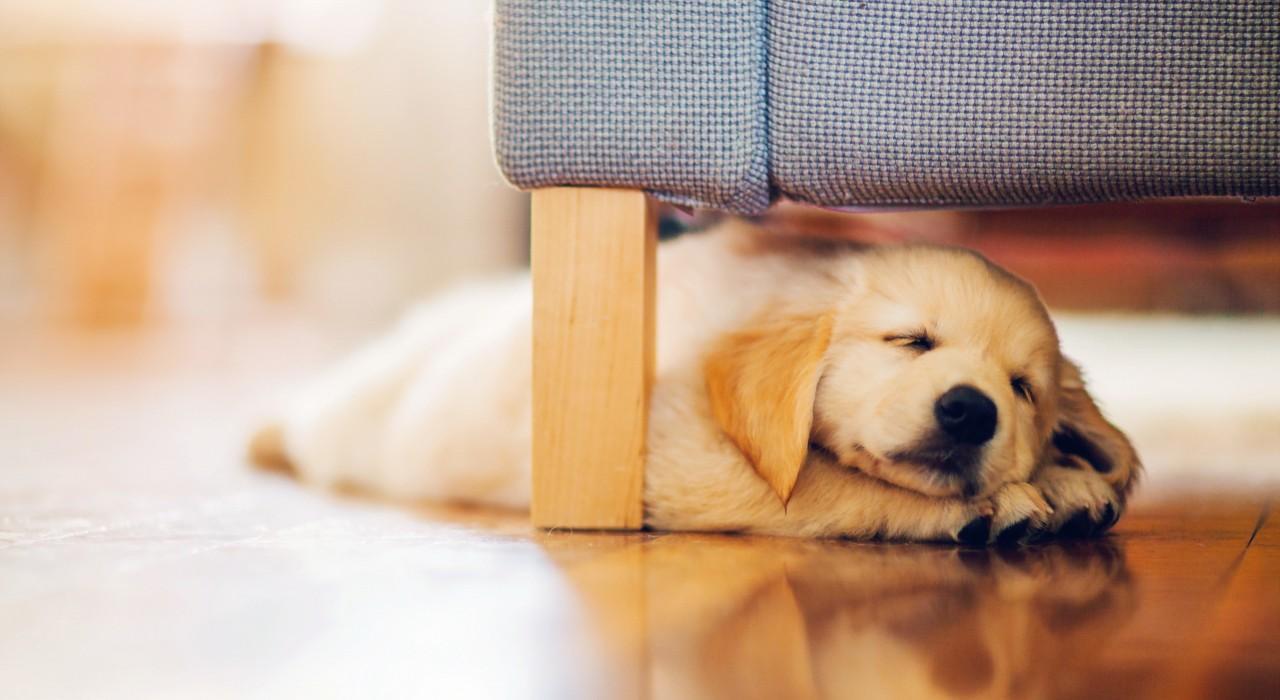 SkyRun's Top 10 Pet-Friendly Vacation Homes